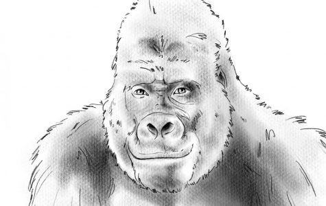 While Ivan the gorilla is believed to be a harsh mammal, he is actually a very sweet-natured creature.