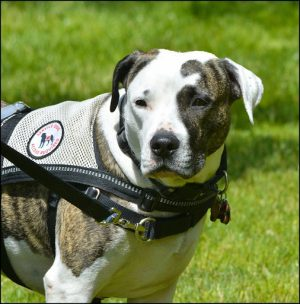 Hart adds wellness dogs to help with mental health issues